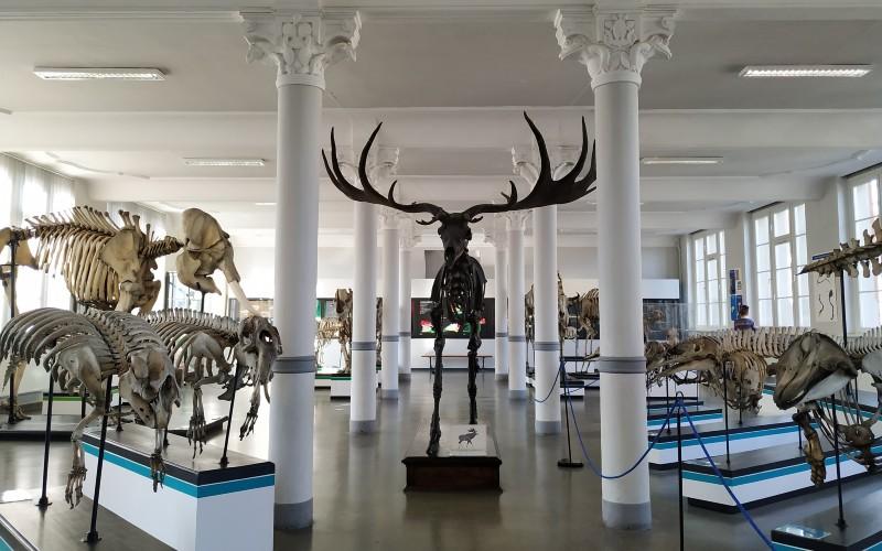 Wnętrze Muzeum Przyrodniczego