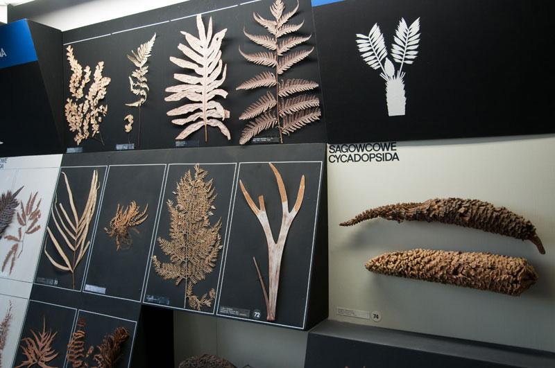 Wystawa Świat roślin